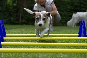 Hundephysiotherapie Osnabrück, Physiotherapie für Hunde Osnabrück, Therapie für Hunde Osnabrück, Alternative Therapie für Hunde Osnabrück, Osteopathie für Hunde Osnabrück, Hundeosteopathie Osnabrück